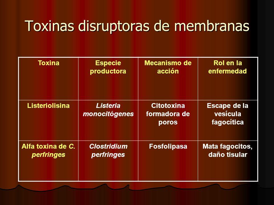 Toxinas disruptoras de membranas