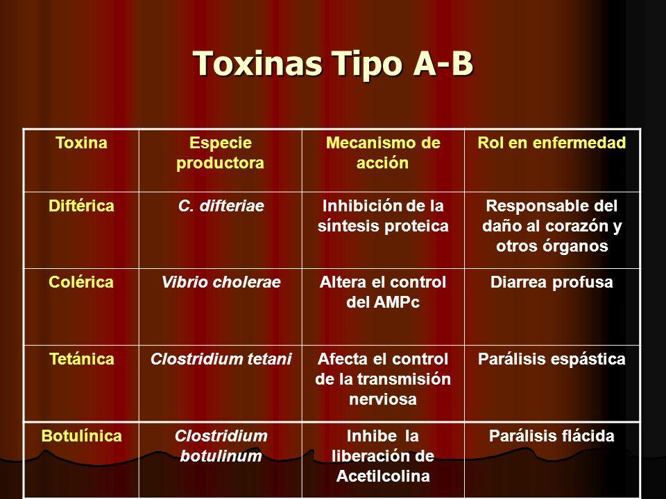 Toxinas Tipo A-B Toxina Especie productora Mecanismo de acción