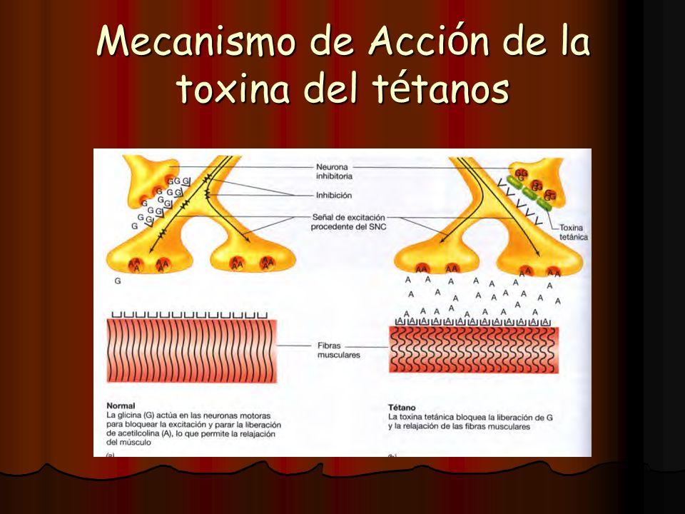 Mecanismo de Acción de la toxina del tétanos