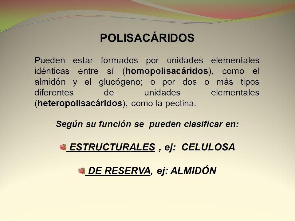 Según su función se pueden clasificar en: ESTRUCTURALES , ej: CELULOSA