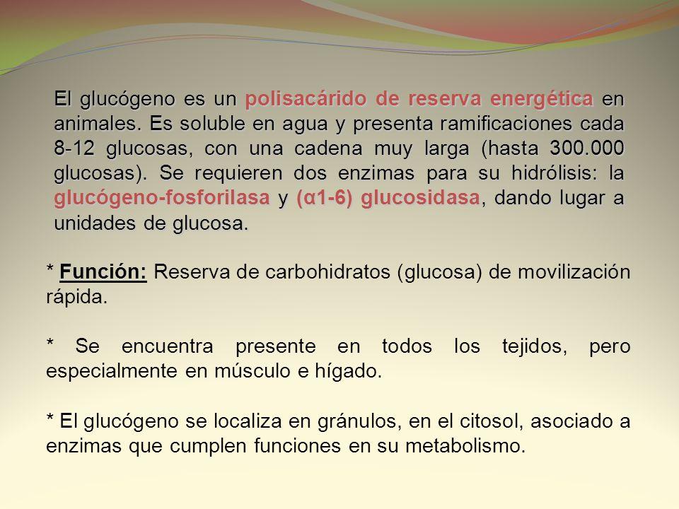 El glucógeno es un polisacárido de reserva energética en animales