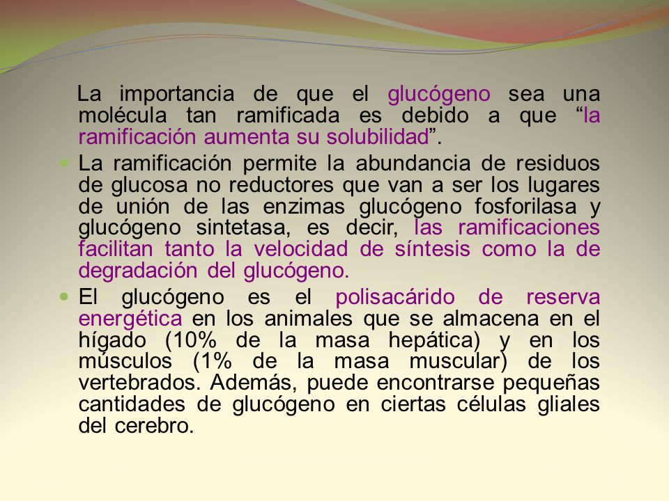 La importancia de que el glucógeno sea una molécula tan ramificada es debido a que la ramificación aumenta su solubilidad .