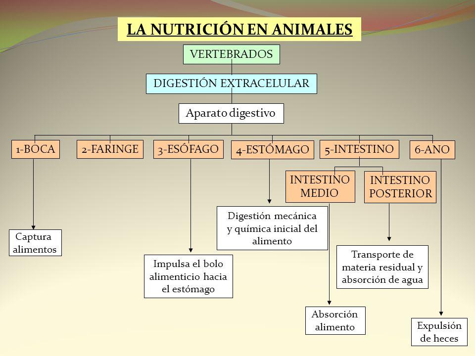 LA NUTRICIÓN EN ANIMALES