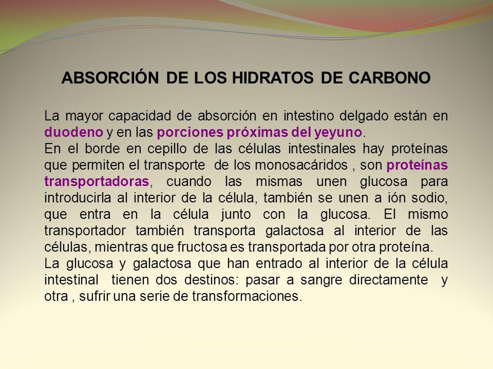 ABSORCIÓN DE LOS HIDRATOS DE CARBONO