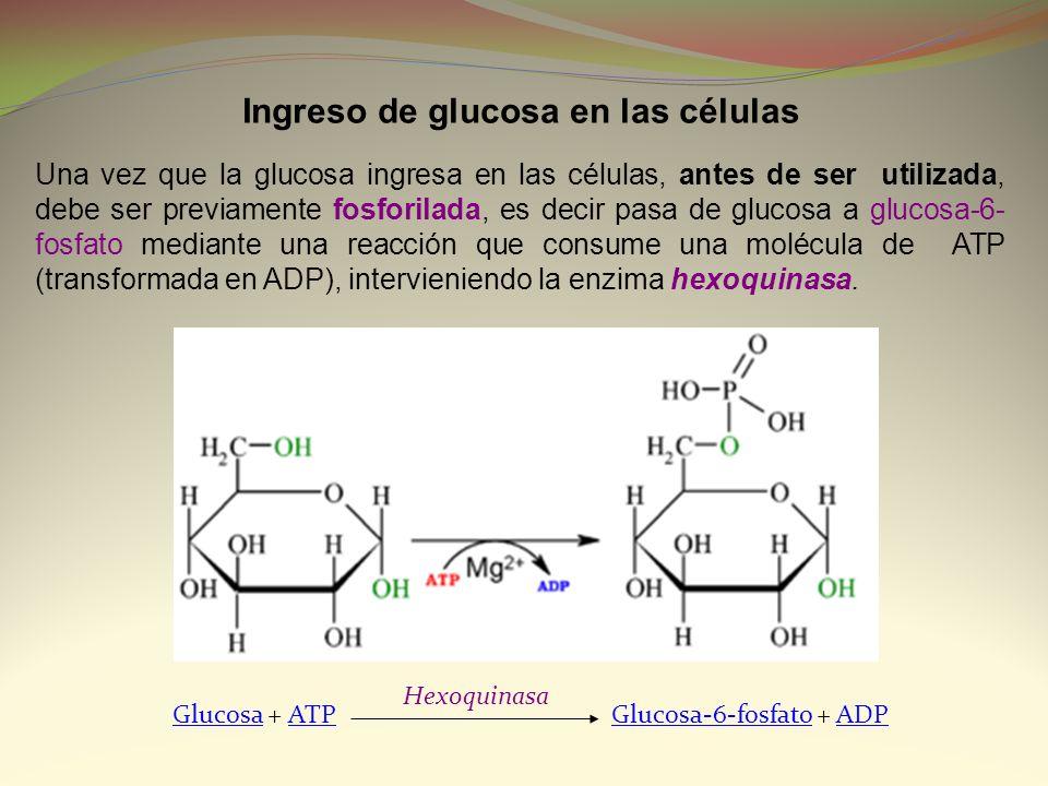 Ingreso de glucosa en las células