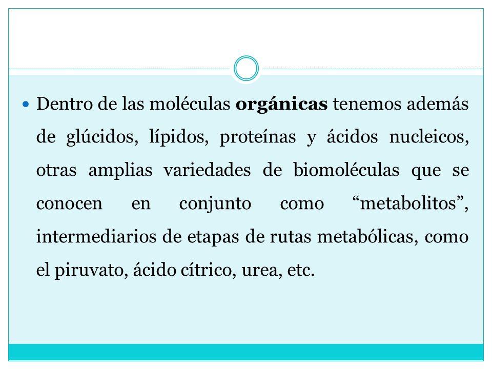 Dentro de las moléculas orgánicas tenemos además de glúcidos, lípidos, proteínas y ácidos nucleicos, otras amplias variedades de biomoléculas que se conocen en conjunto como metabolitos , intermediarios de etapas de rutas metabólicas, como el piruvato, ácido cítrico, urea, etc.