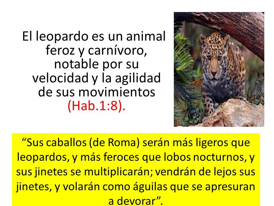 El leopardo es un animal feroz y carnívoro, notable por su velocidad y la agilidad de sus movimientos (Hab.1:8).