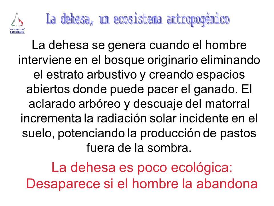 La dehesa, un ecosistema antropogénico