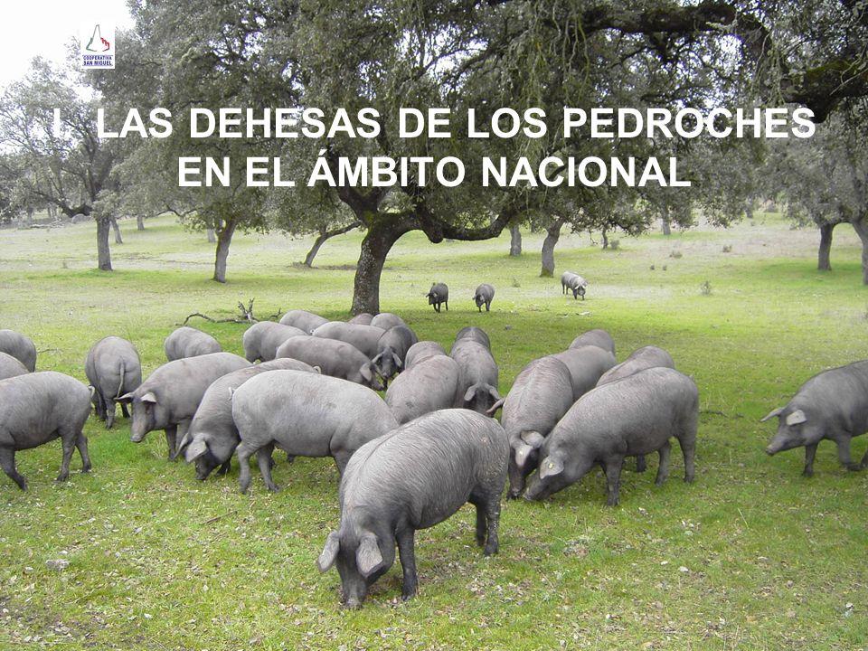 LAS DEHESAS DE LOS PEDROCHES