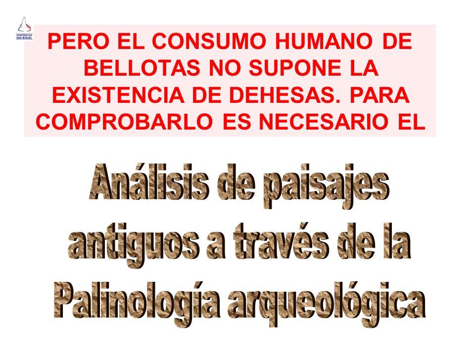 Palinología arqueológica