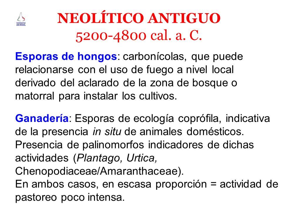 NEOLÍTICO ANTIGUO 5200-4800 cal. a. C.