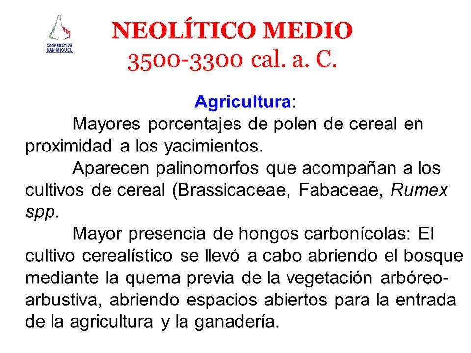 NEOLÍTICO MEDIO 3500-3300 cal. a. C. Agricultura: