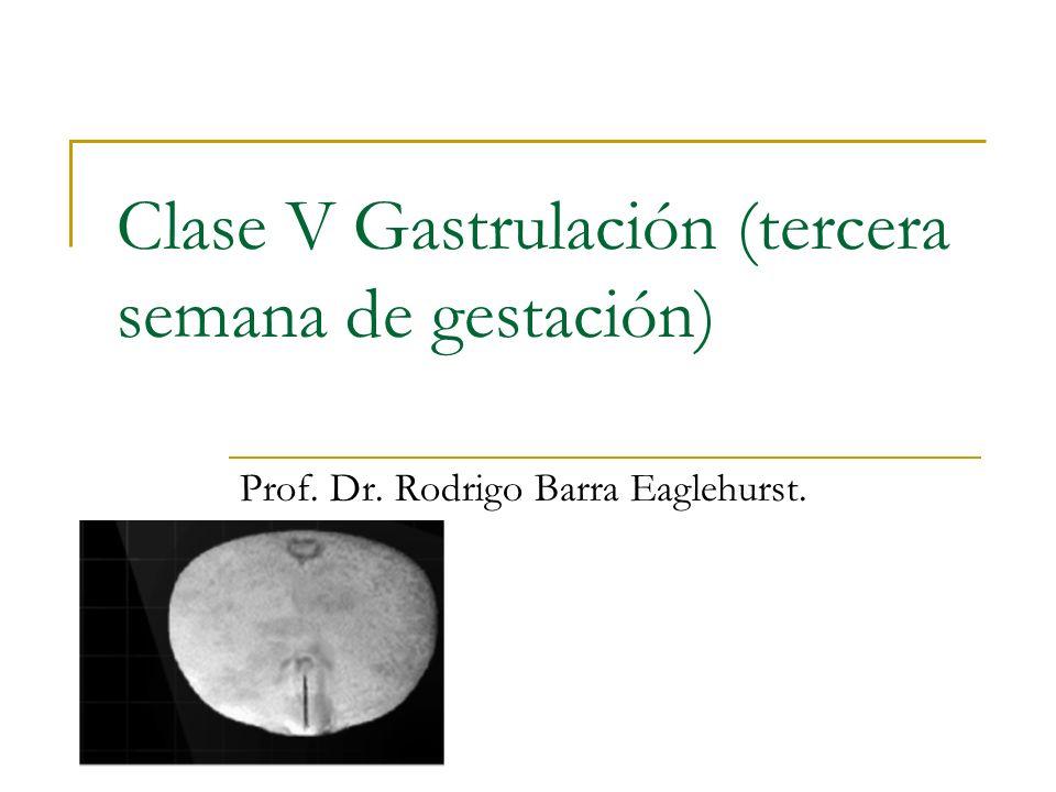 Clase V Gastrulación (tercera semana de gestación)