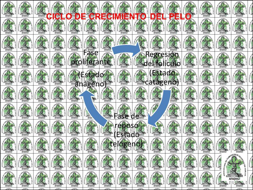 CICLO DE CRECIMIENTO DEL PELO