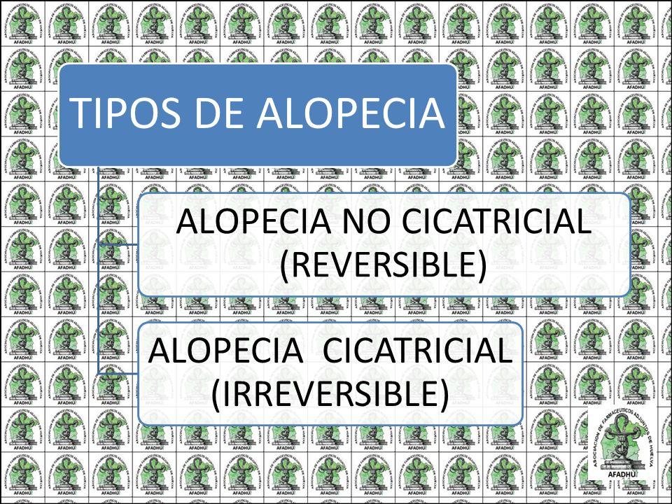 ALOPECIA NO CICATRICIAL (REVERSIBLE)
