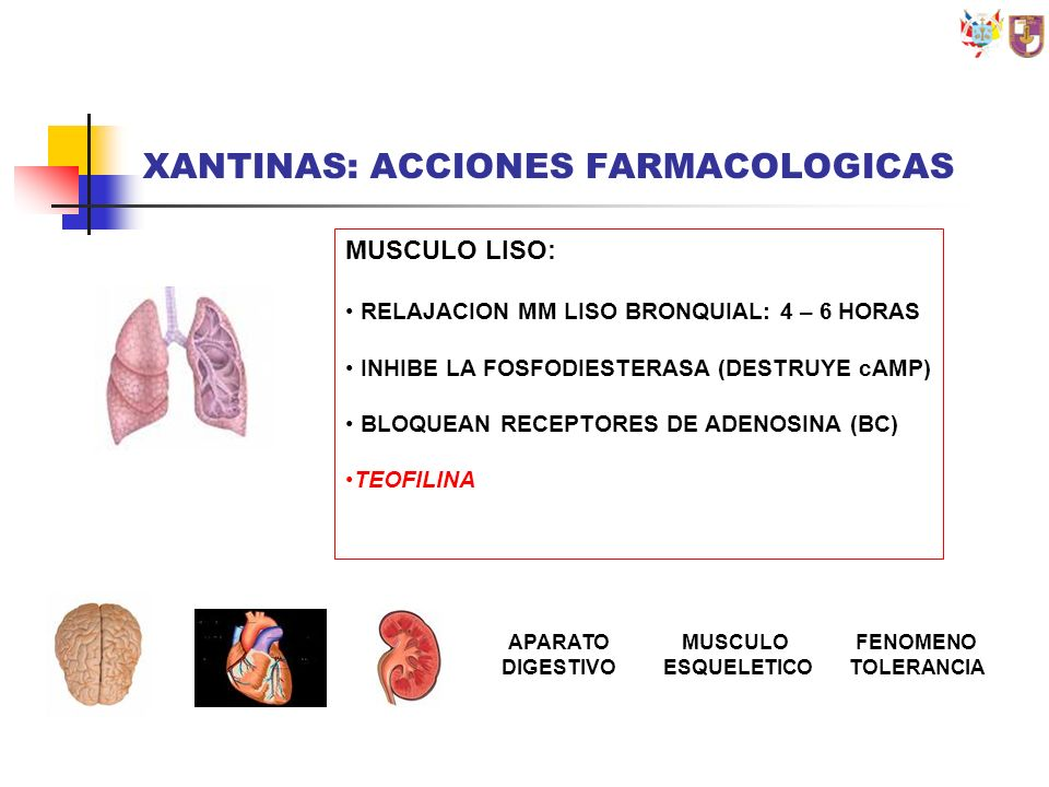 XANTINAS: ACCIONES FARMACOLOGICAS