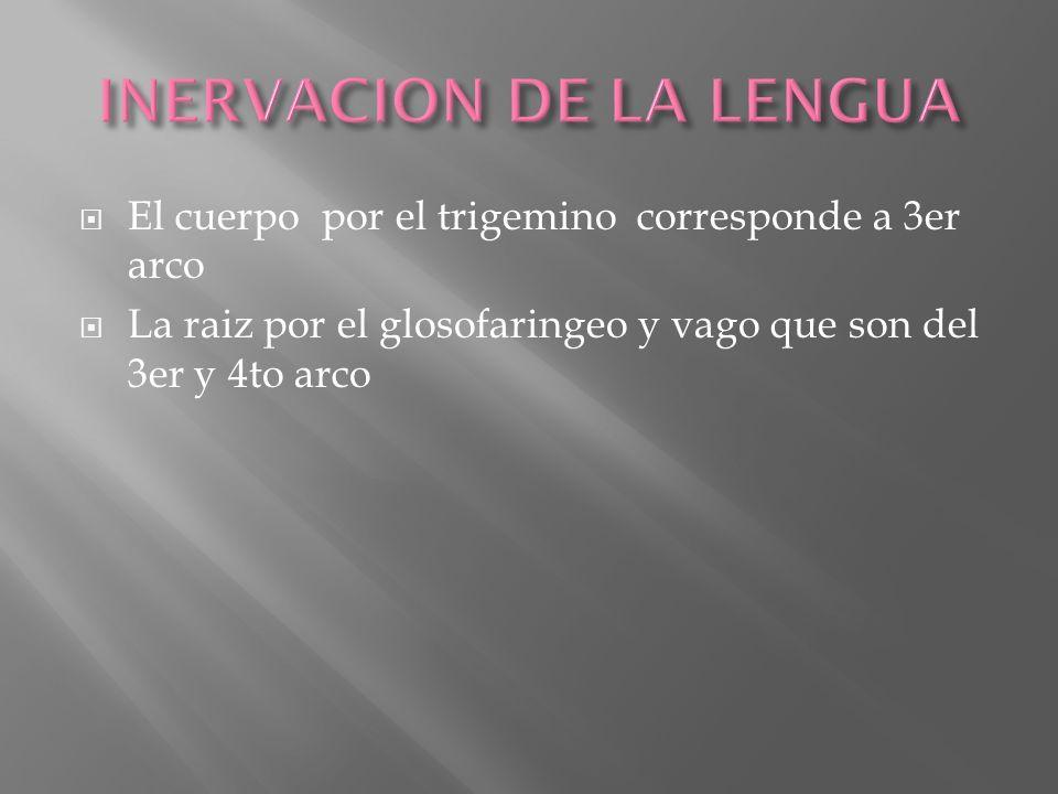 INERVACION DE LA LENGUA