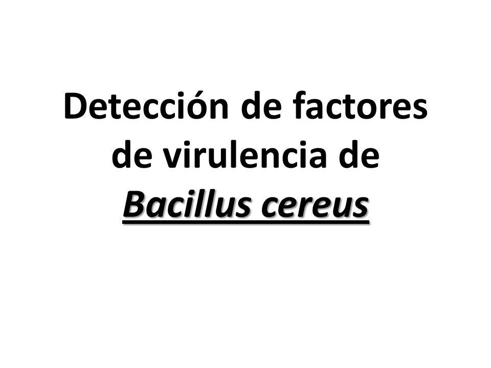Detección de factores de virulencia de Bacillus cereus