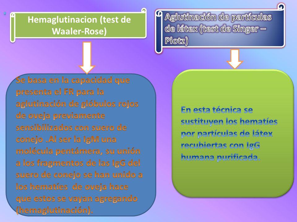Hemaglutinacion (test de Waaler-Rose)