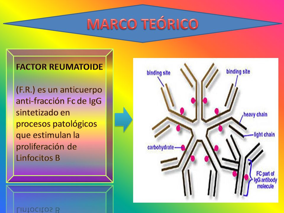 MARCO TEÓRICO FACTOR REUMATOIDE