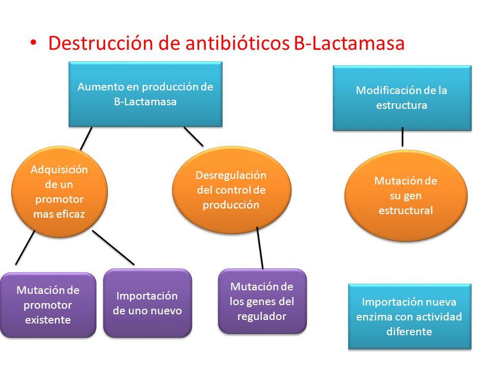Destrucción de antibióticos B-Lactamasa