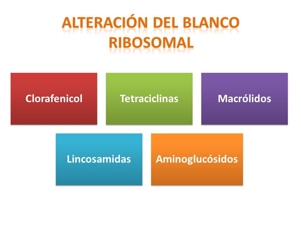 ALTERACIÓN DEL BLANCO RIBOSOMAL