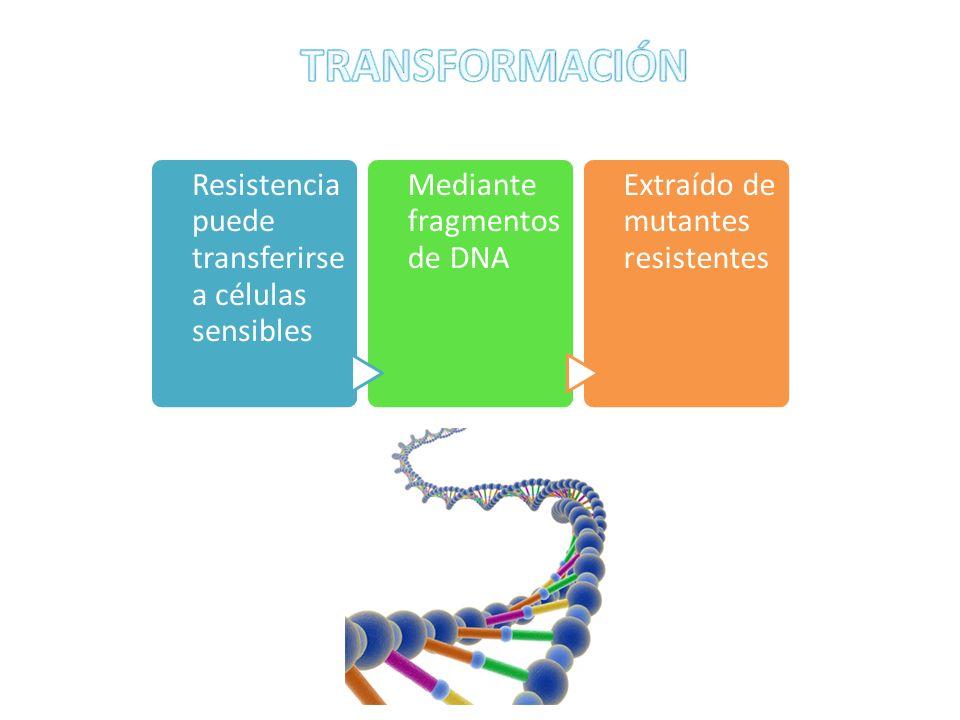 TRANSFORMACIÓN Resistencia puede transferirse a células sensibles