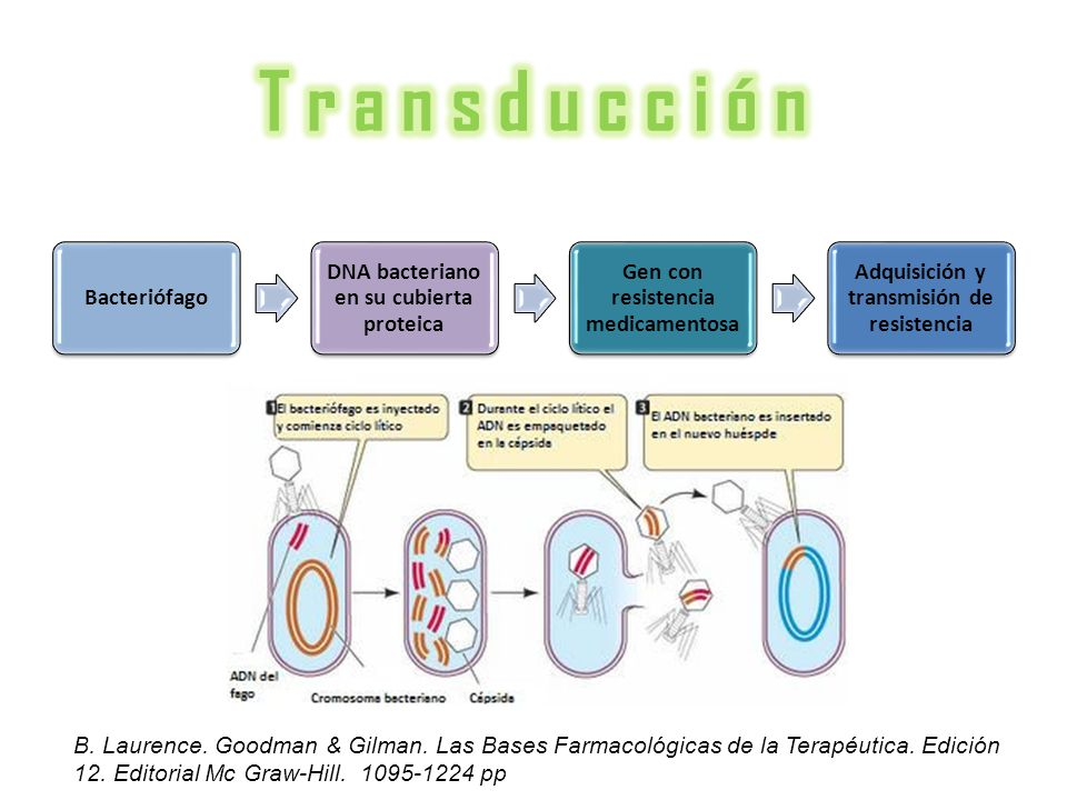 T r a n s d u c c i ó n Bacteriófago