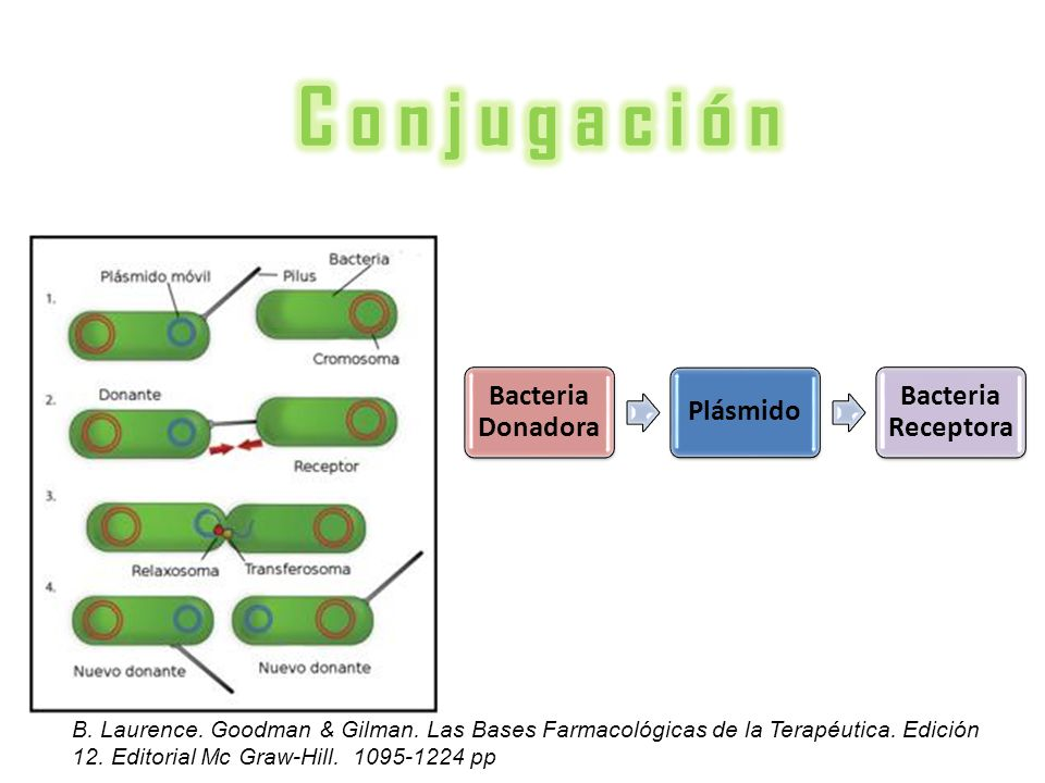 C o n j u g a c i ó n Bacteria Donadora Plásmido Bacteria Receptora