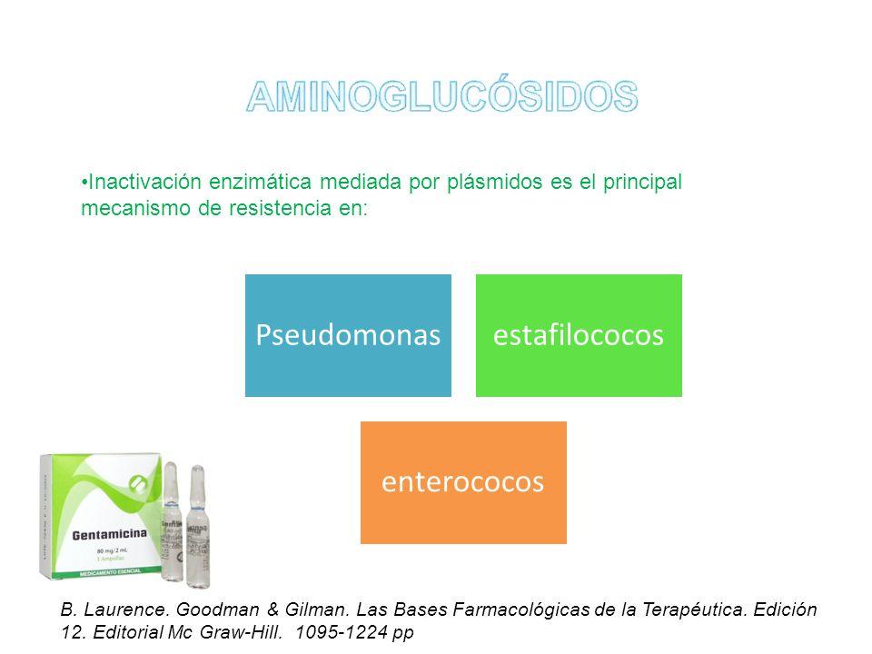 AMINOGLUCÓSIDOS Pseudomonas estafilococos enterococos