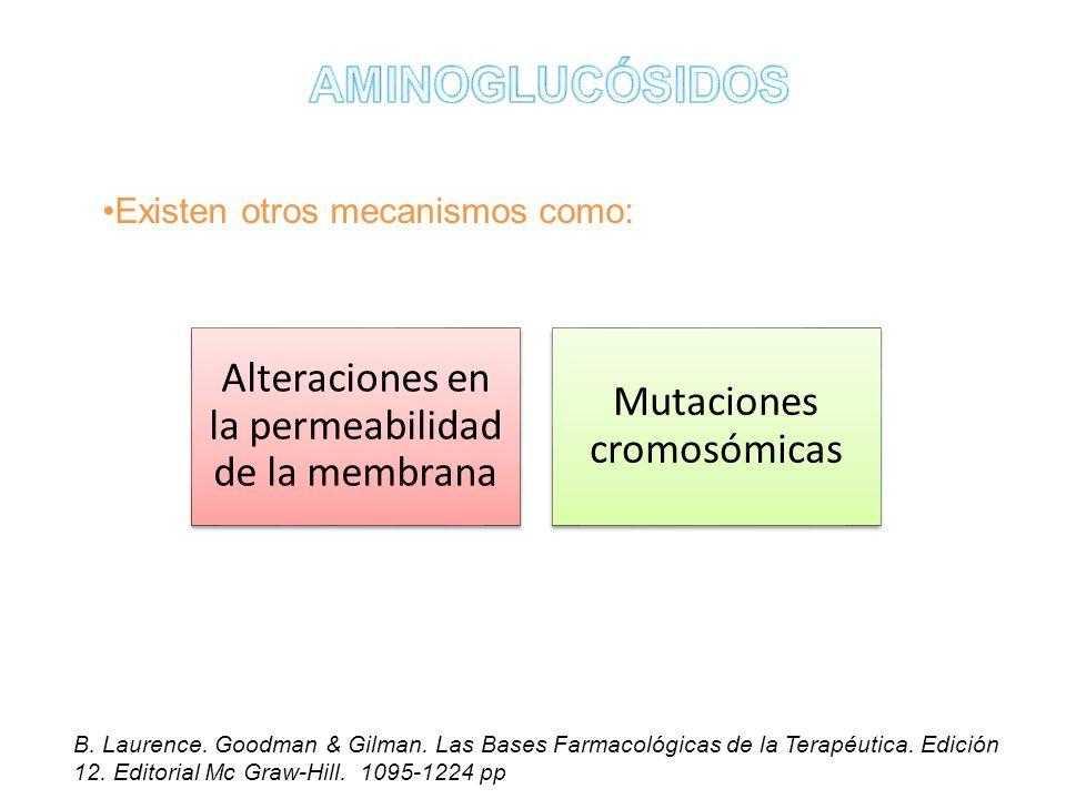 AMINOGLUCÓSIDOS Alteraciones en la permeabilidad de la membrana