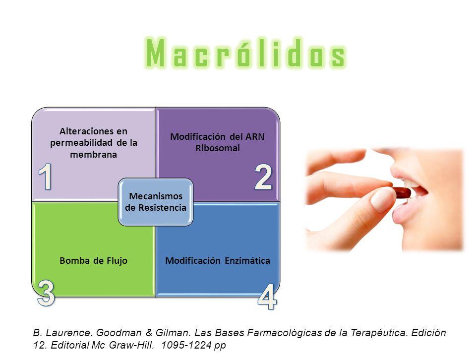 M a c r ó l i d o s Mecanismos de Resistencia. Alteraciones en permeabilidad de la membrana. Modificación del ARN Ribosomal.