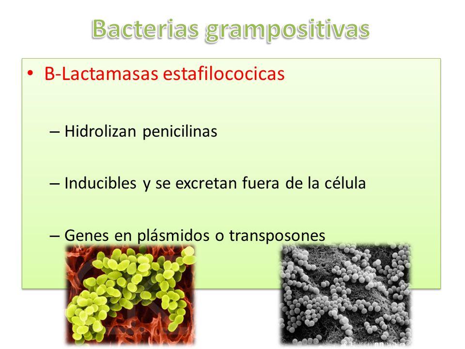 Bacterias grampositivas