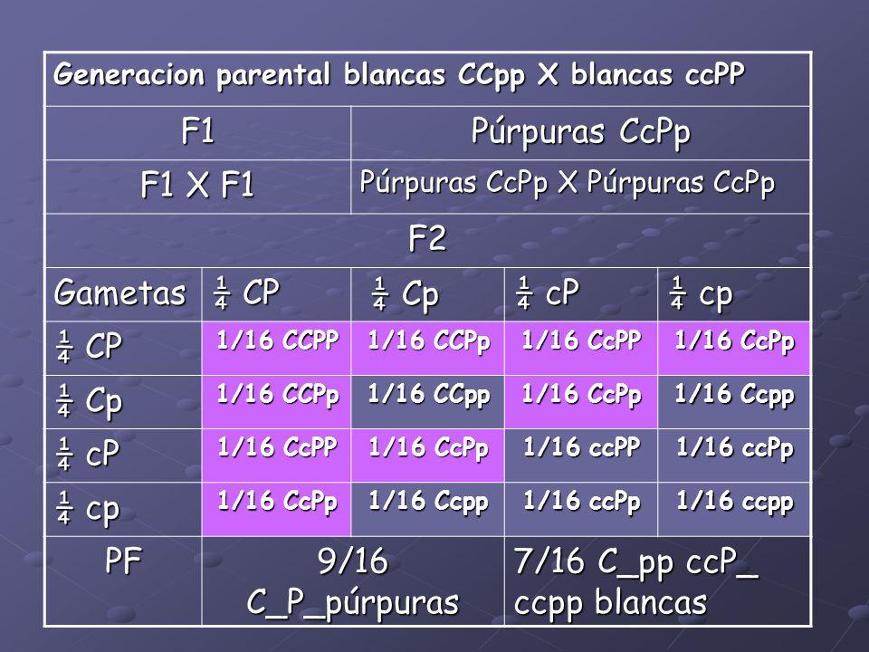 7/16 C_pp ccP_ ccpp blancas