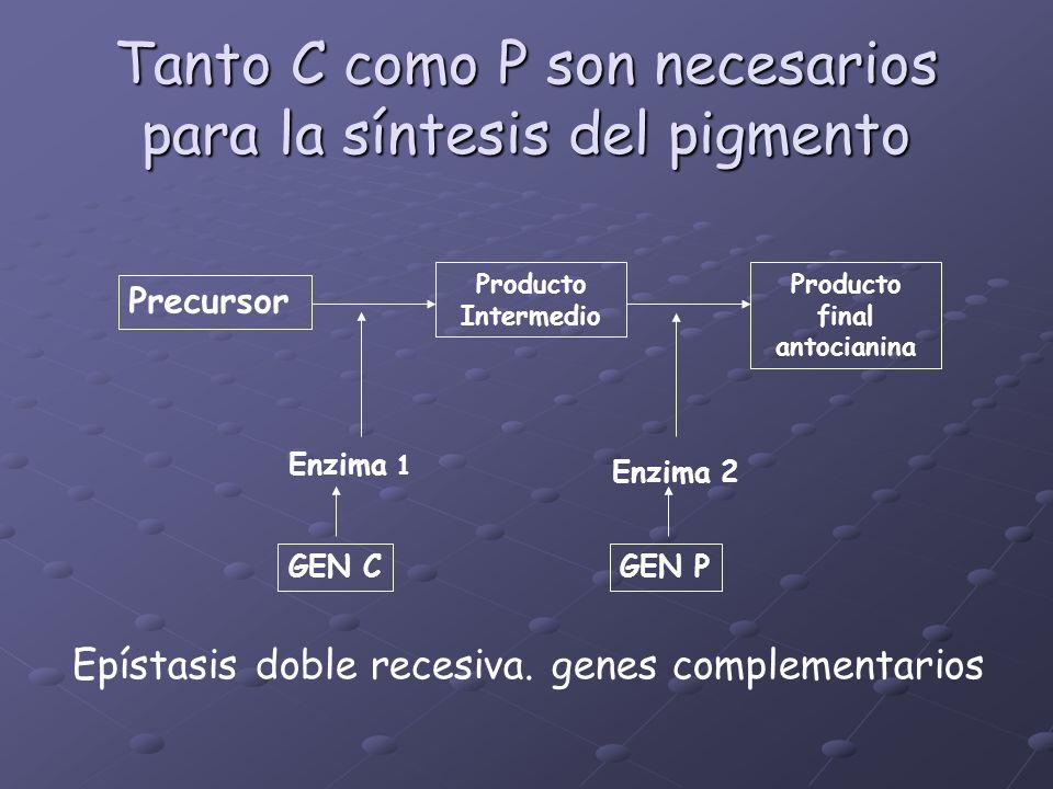 Tanto C como P son necesarios para la síntesis del pigmento
