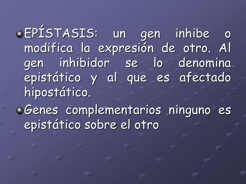 EPÍSTASIS: un gen inhibe o modifica la expresión de otro