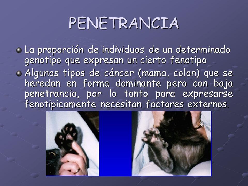 PENETRANCIA La proporción de individuos de un determinado genotipo que expresan un cierto fenotipo.