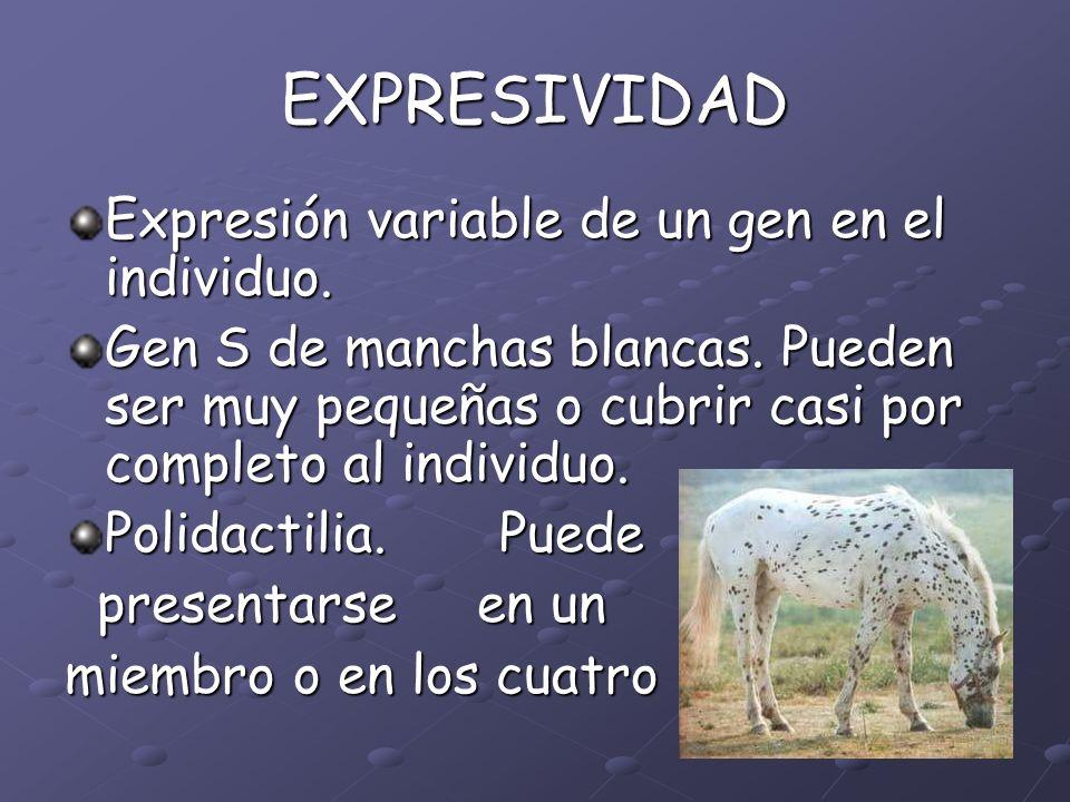 EXPRESIVIDAD Expresión variable de un gen en el individuo.