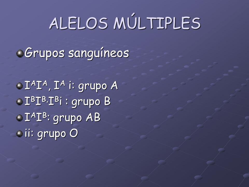 ALELOS MÚLTIPLES Grupos sanguíneos IAIA, IA i: grupo A