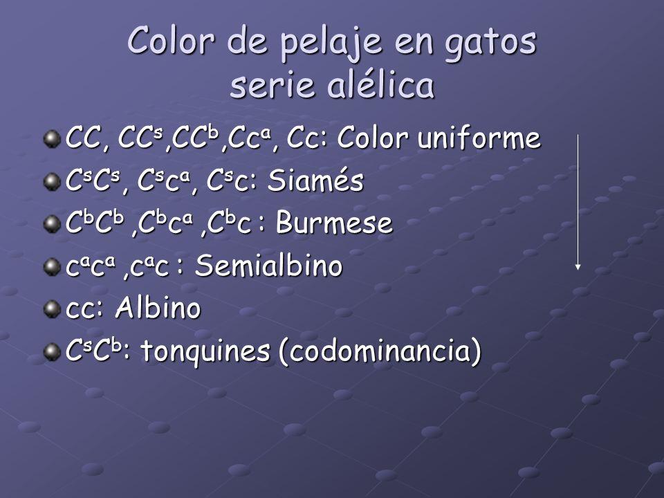 Color de pelaje en gatos serie alélica