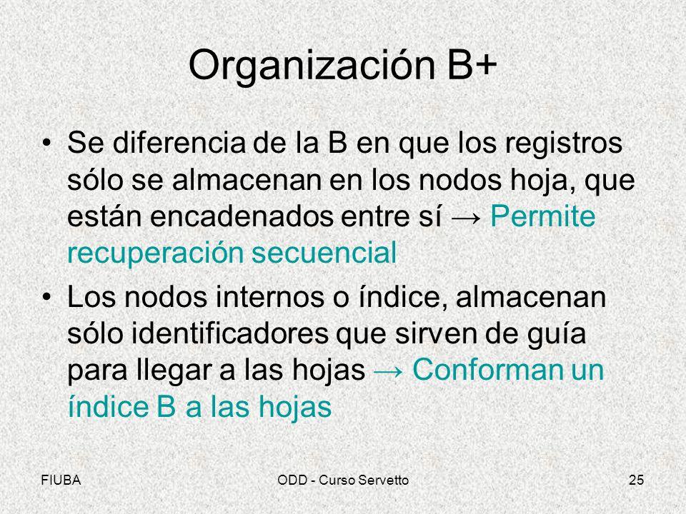 Organización B+