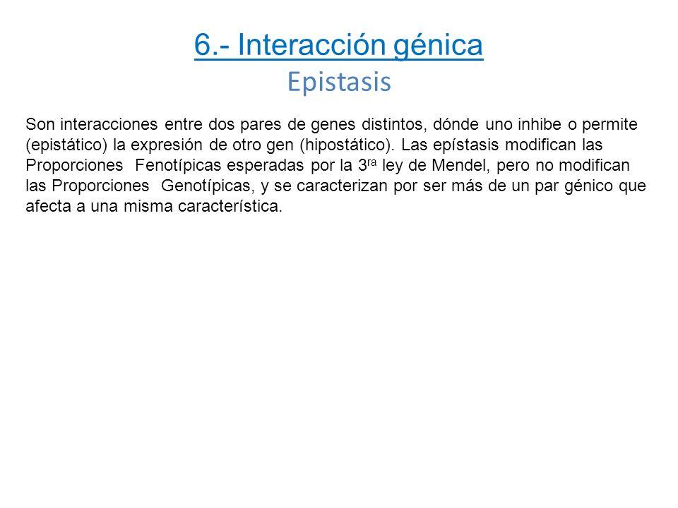 6.- Interacción génica Epistasis