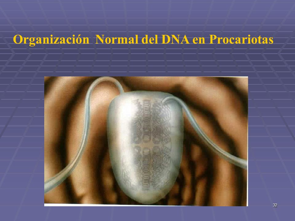 Organización Normal del DNA en Procariotas