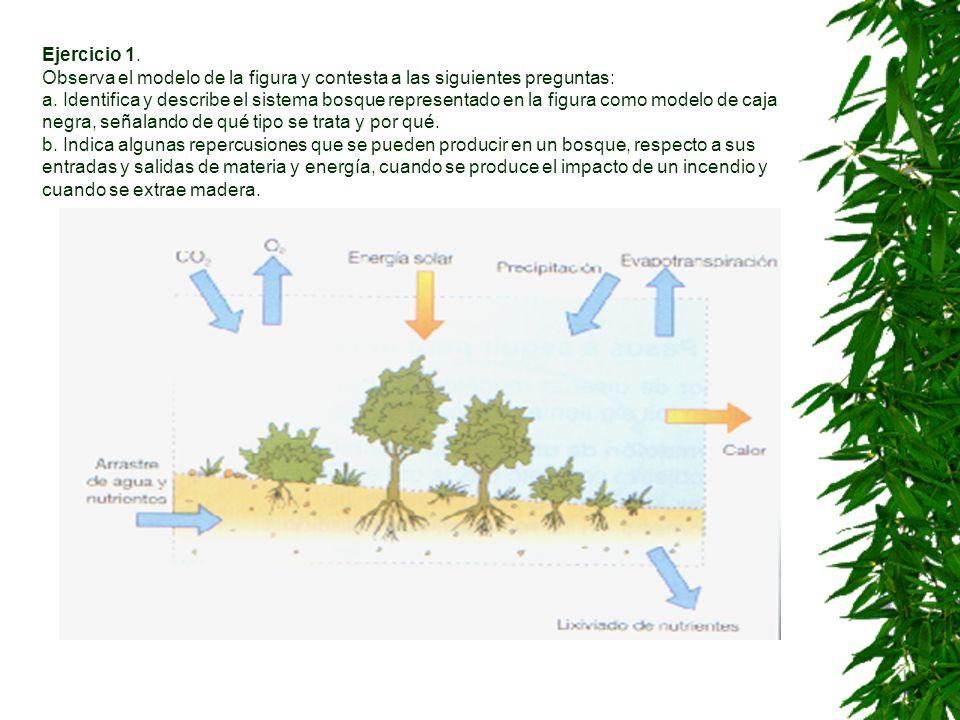Ejercicio 1. Observa el modelo de la figura y contesta a las siguientes preguntas: a.