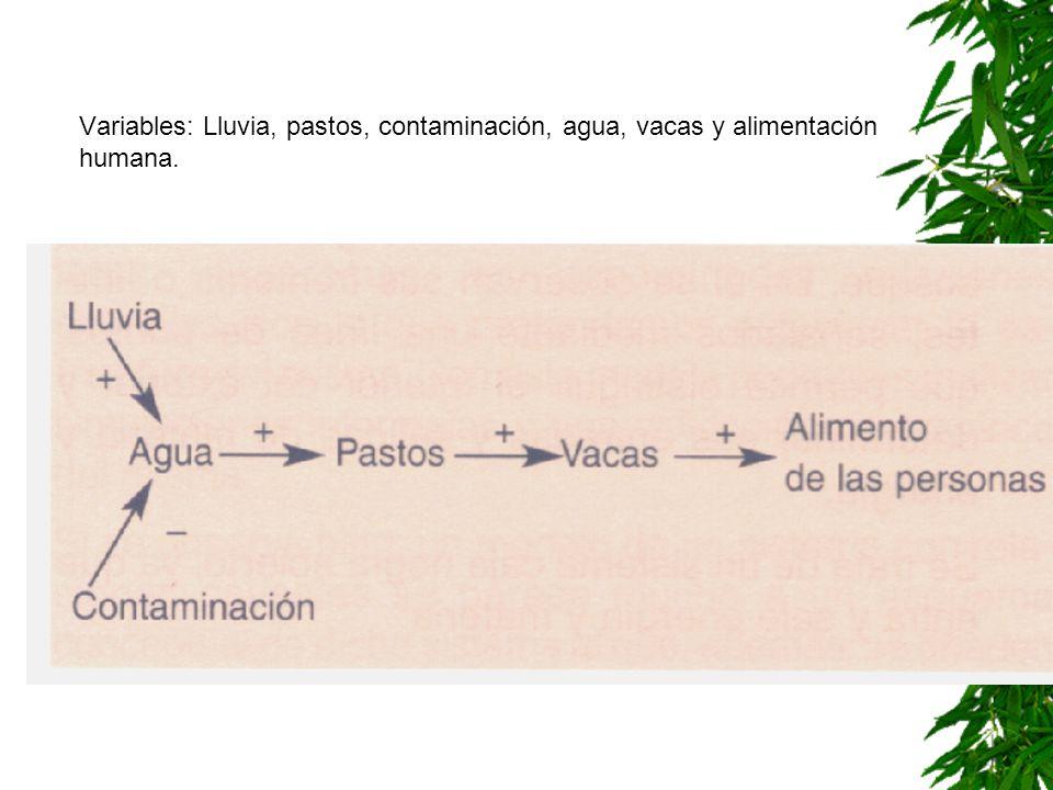 Variables: Lluvia, pastos, contaminación, agua, vacas y alimentación humana.