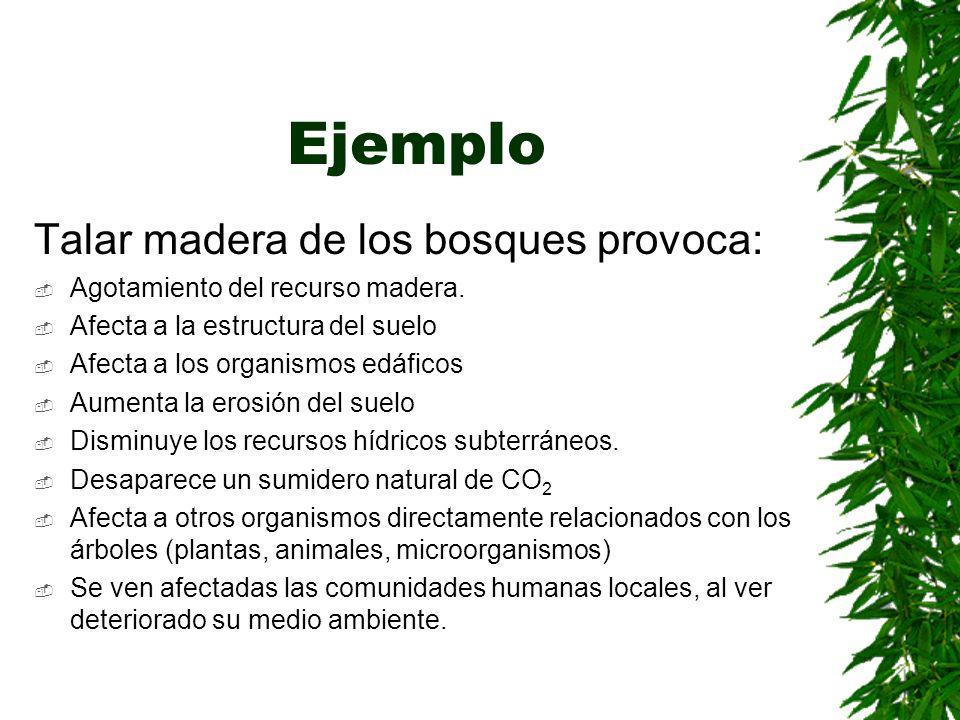 Ejemplo Talar madera de los bosques provoca: