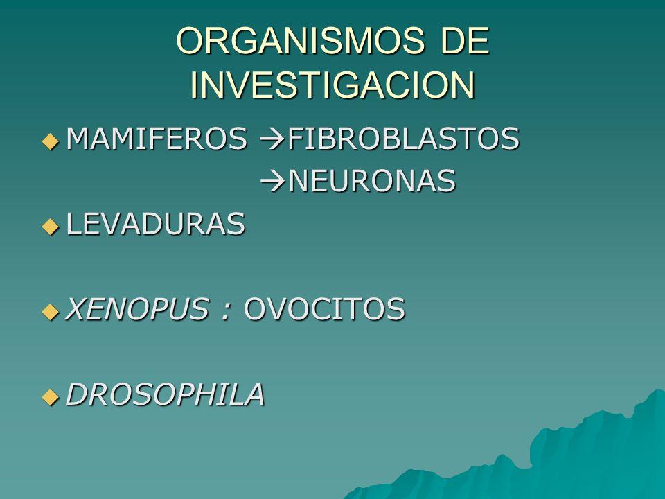 ORGANISMOS DE INVESTIGACION