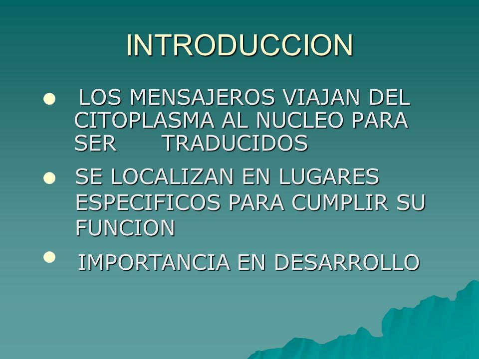 INTRODUCCION LOS MENSAJEROS VIAJAN DEL CITOPLASMA AL NUCLEO PARA SER TRADUCIDOS. SE LOCALIZAN EN LUGARES ESPECIFICOS PARA CUMPLIR SU FUNCION.