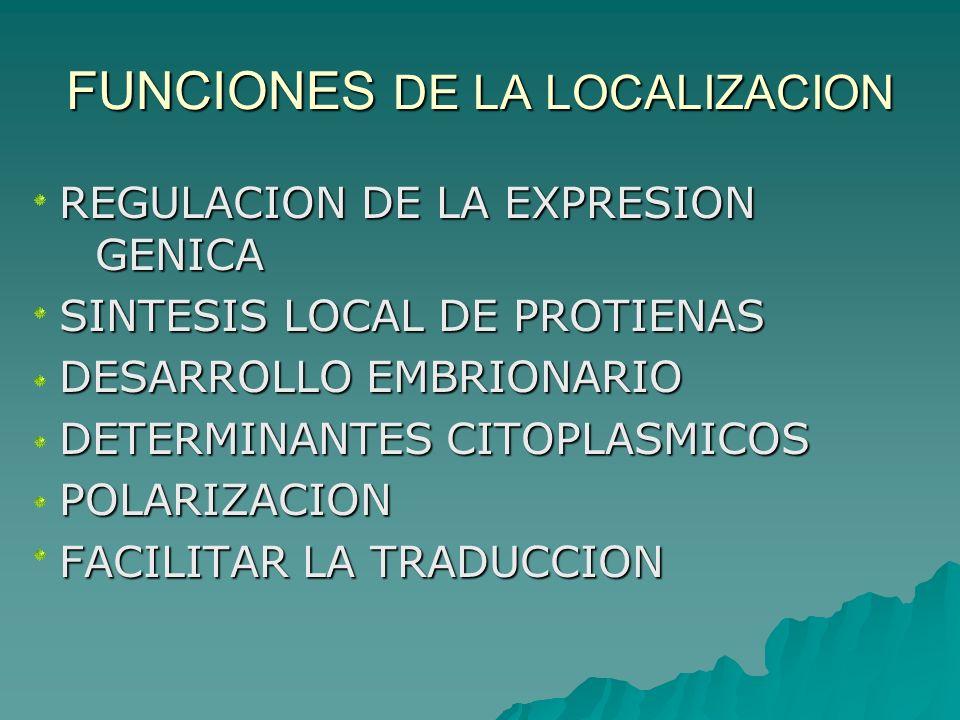 FUNCIONES DE LA LOCALIZACION
