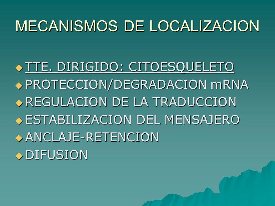 MECANISMOS DE LOCALIZACION
